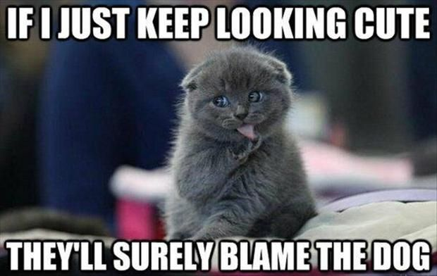 Funny Cat with Captions 14
