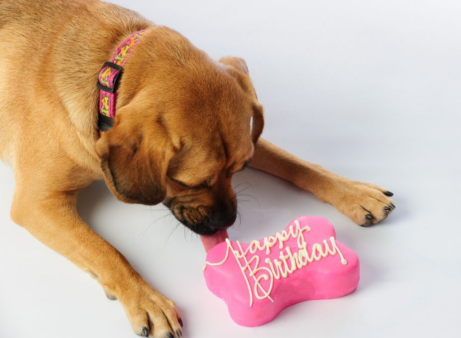 of Dog Birthday Cake
