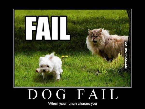 Funny Cat Fail Pics 14 High Resolution Wallpaper