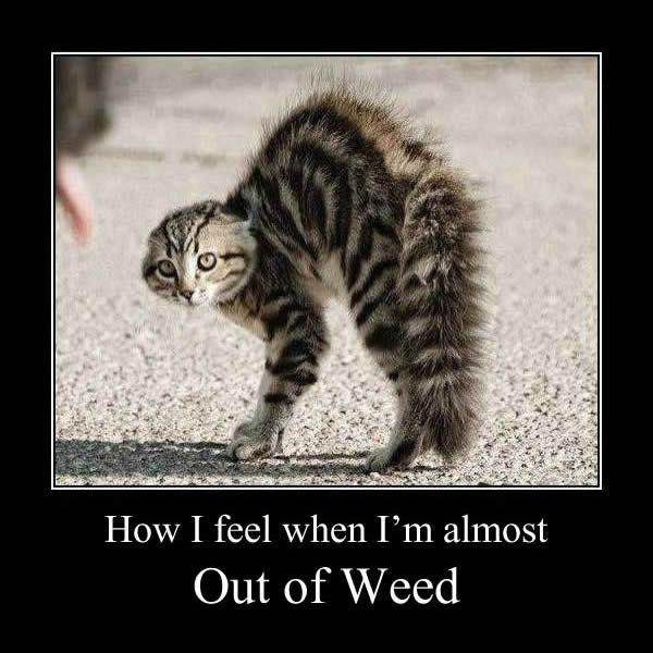 Stoner Cat Out of Weed Funny Marijuana Meme