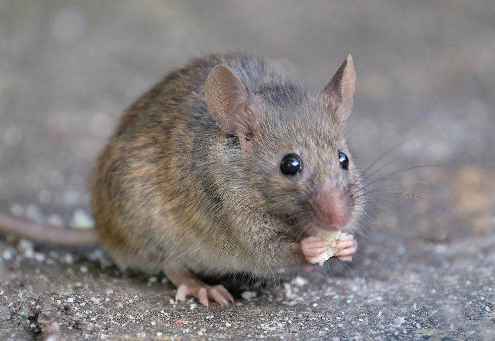 11 Things Mice Don t Want You to Know