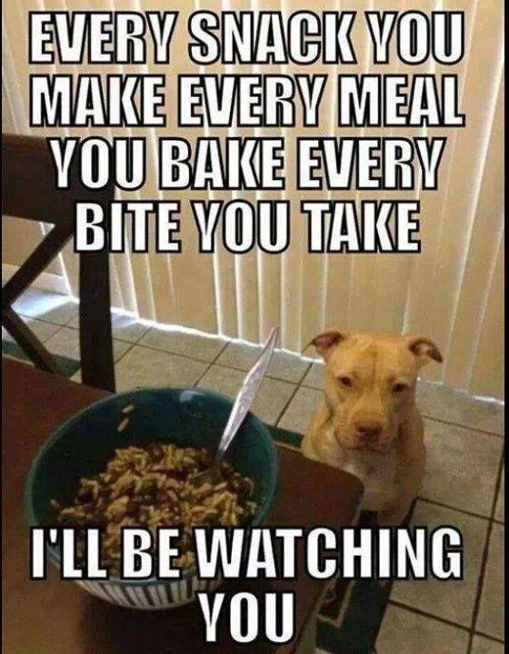 Looks like my Juno Funny Dog Memes Funny Dogs Funny Animal Memes Funny