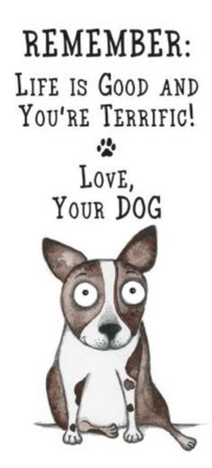 All Dogs I Love Dogs Cute Dogs Dogs And Puppies Dog Quotes Dog Mom Dog Care Funny Dogs Your Dog