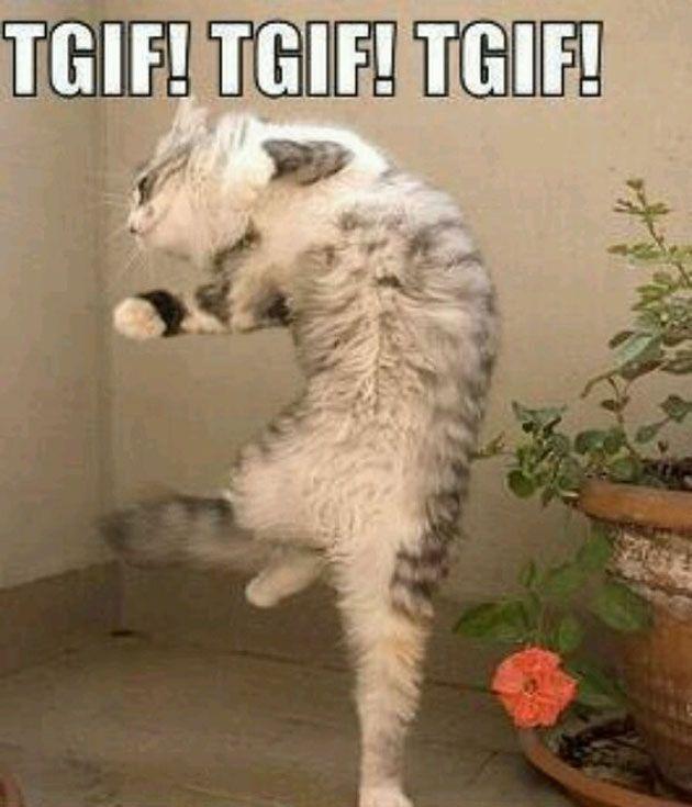 cat dancing t friday memes