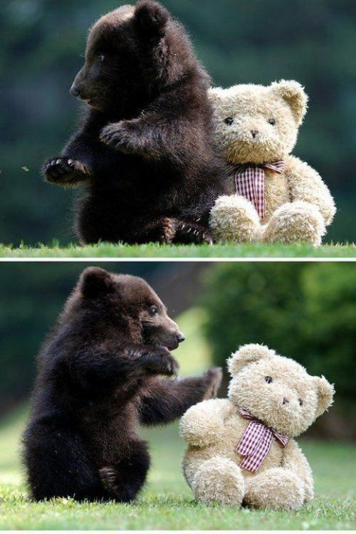 adorable bear cub