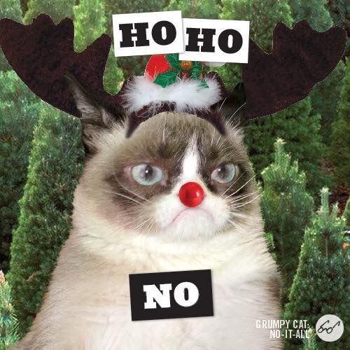 b8133f94addfb0b7ad6075e4cd2283fa grumpy cat christmas christmas animals