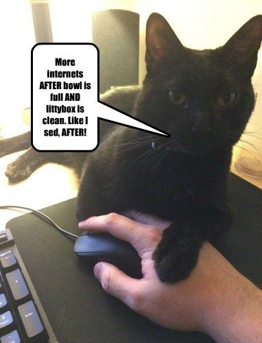 minion the internets Cats