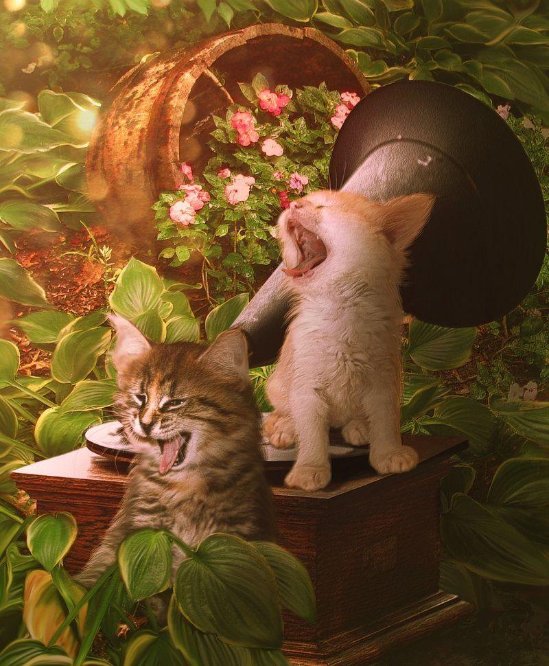 Duet by MariLuciaviantart on deviantART Tres Belle Cute Funny