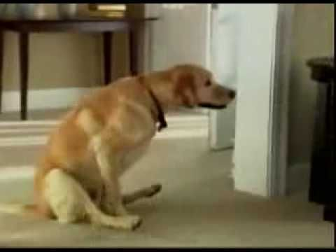 funny pilation of Dogs Wiping their Bums