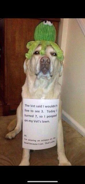 Funny doggo
