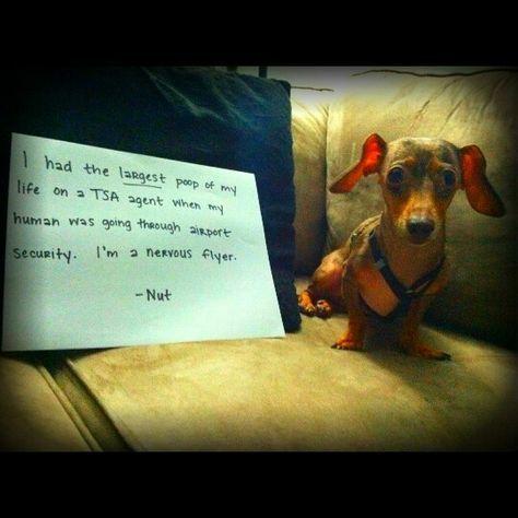 2e0dd720bb56bb c5f2958a86d13 funny dog shaming funny dogs
