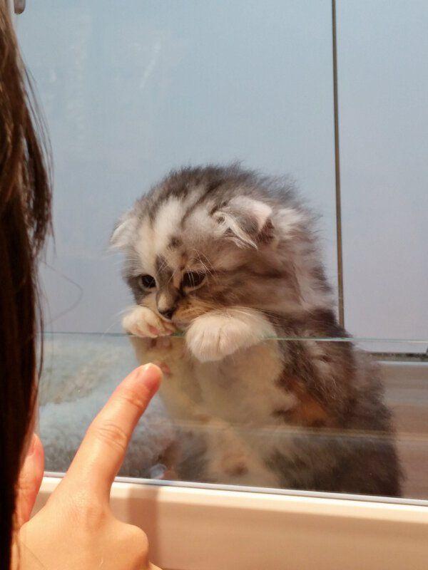 Kittens Cutest Cutest Animals