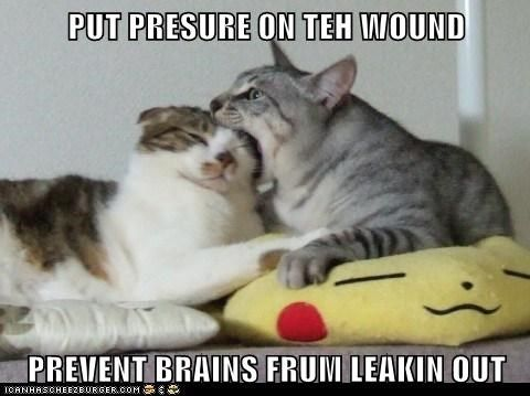 bite brains captions Cats head pressure teeth wound