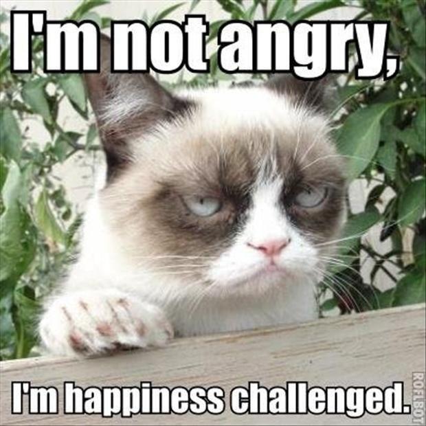grumpy cat funny cats