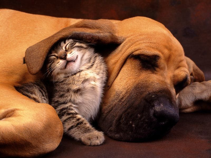 Cute Cat And Dog Friends Picture