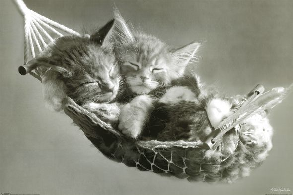 Cute kittens black and white photos