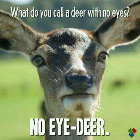 What do you call a deer with no eyes No eye deer Dumb Jokes