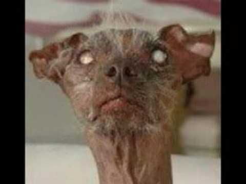 Funny Dogs & Cats Unusual Ugly Beauty is in the eye of the beholder
