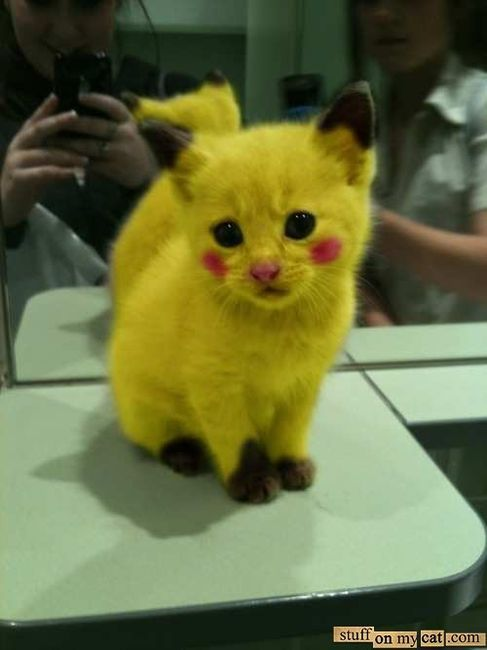 Pikachu Cat Stuff My Cat Toooooo cute