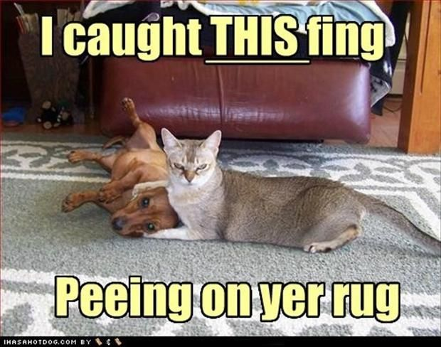 See the Awesome Dog and Cat Funny Memes