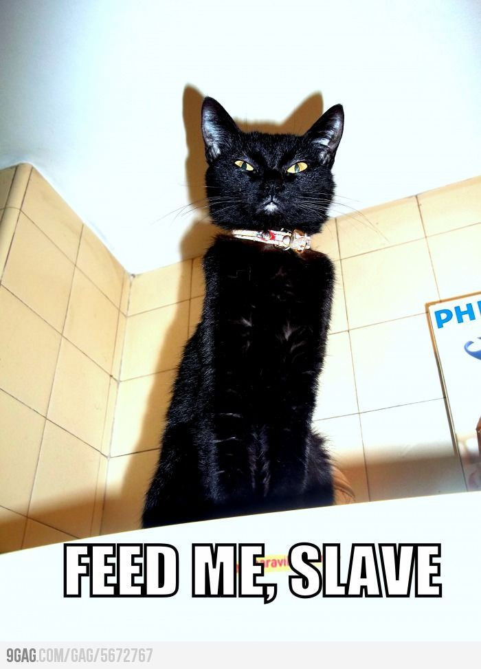 This is the way it is in every house owned by a cat or two or three