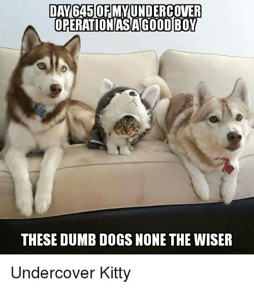 Dogs Dumb and Kitties DANGA50FMMUNDERCOVER OPERATION AS AGOOD BOY THESE DUMB DOGS NONE