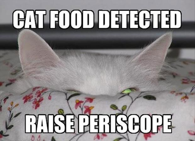 Funny Cat with Captions 48