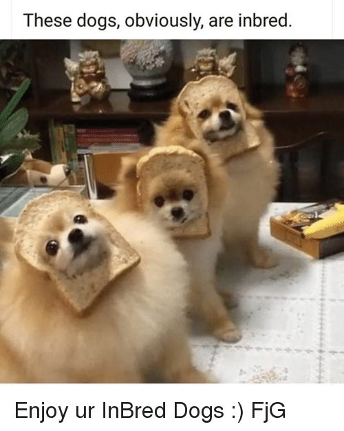 Dogs Memes and 🤖 These dogs obviously are inbred Enjoy