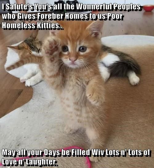 Funny picture of a kitten saluting that has been made into a cat meme captioned