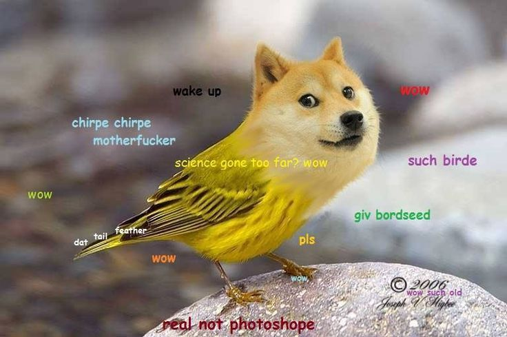 Doge Meme Has Science Gone Too Far Not Far Enough