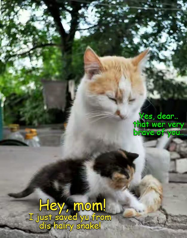 A Bwave Asplorer Kitteh in the making Funny Cats Cute Funny Animals Cute