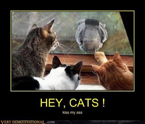 bird butt Cats window