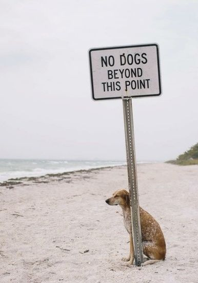 See the Best Of Funny Animal Vacation Pictures