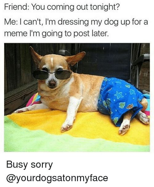 Dogs Friends and Meme Friend You ing out tonight Me