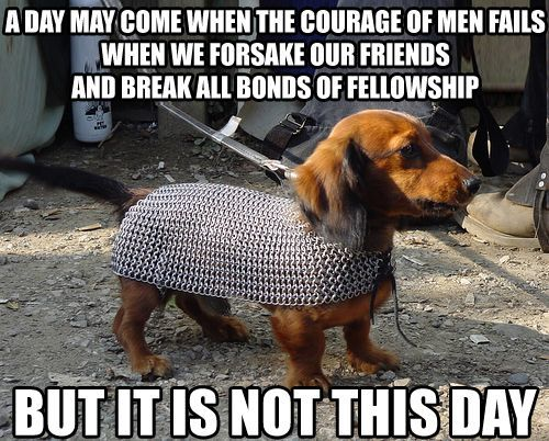 Behold the inspirational majesty of Dachshunds of Middle Earth Chain Mail Dachshund Funny