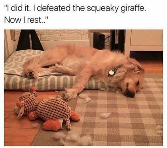30 Animal Memes – Funnyfoto