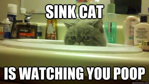 Sink cat is watching you poop