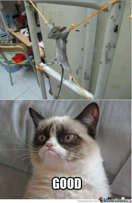 Grumpy Cat Approves