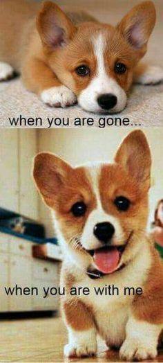 Funny Dogs Funny Corgi Funny Animal Puppy Funny s