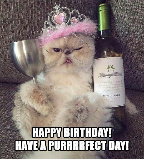 funny birthday memes Cat memes
