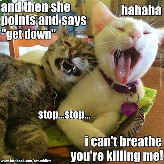 Funny Cats Funny Funny Cat Memes GIF Cat GIFs Dogs Animal Captions LOLcats Have Fun