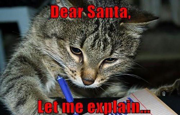 christmas cats 28