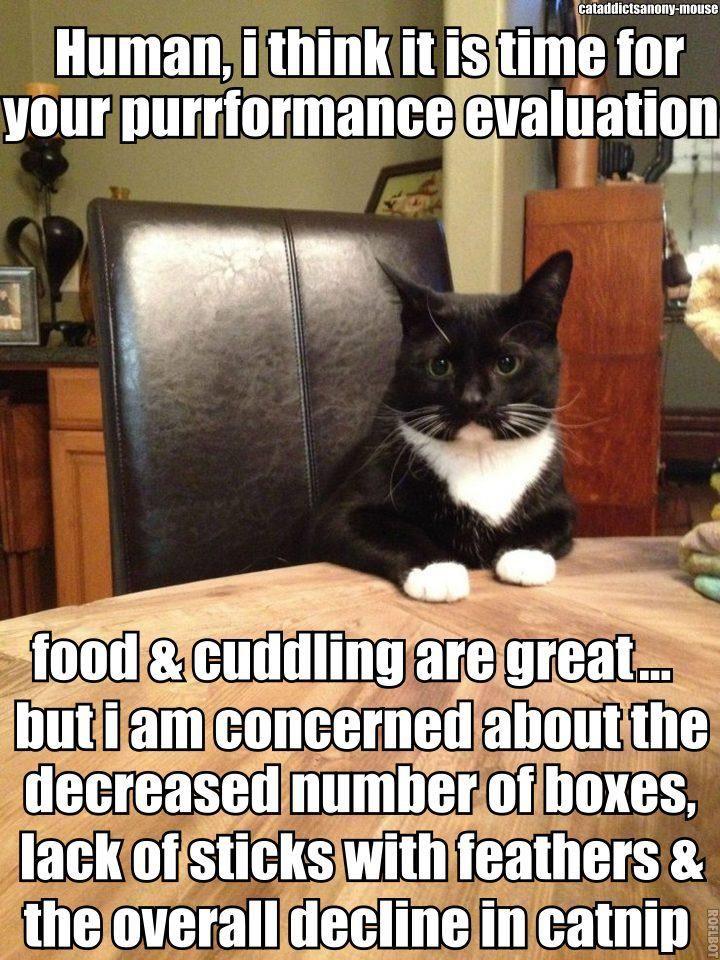 Funny Happy Friday Cat id