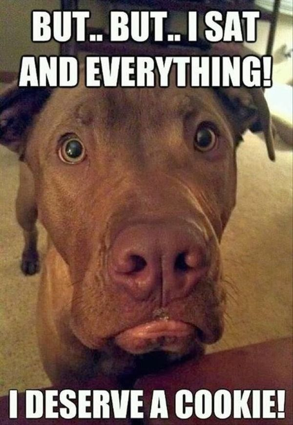 17 Dog Memes With Captions That Will Make You LOL funny picture
