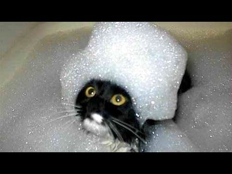 The funniest and most humorous cat videos ever Funny cat pilation