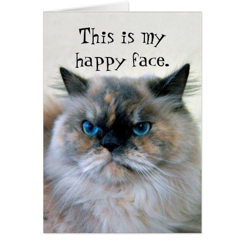 Happy Birthday Humor Himalayan Persian Cat Card