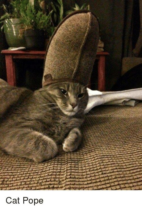 Imgur Cat