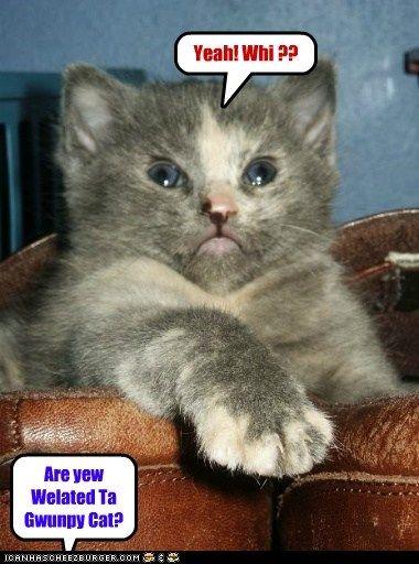 tardar sauce relative captions Grumpy Cat Cats frown cousin