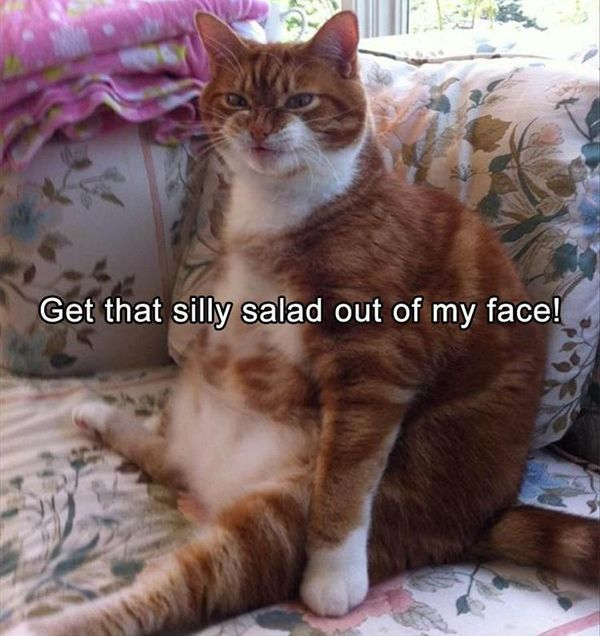 Awesome funny fat cat pictures captions