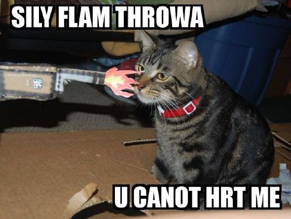 Funny cat pictures with guns funny cat picture funny cats photos quotes meme views 575x432